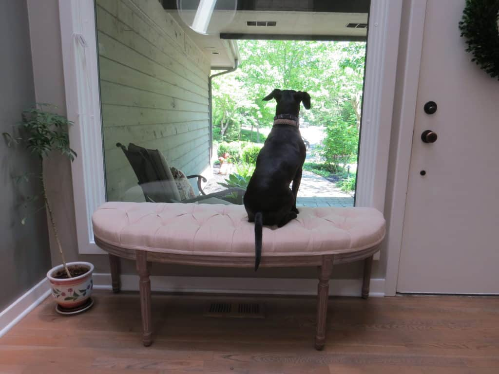 Entryway bench with my dog Lilly sitting on it looking outside.