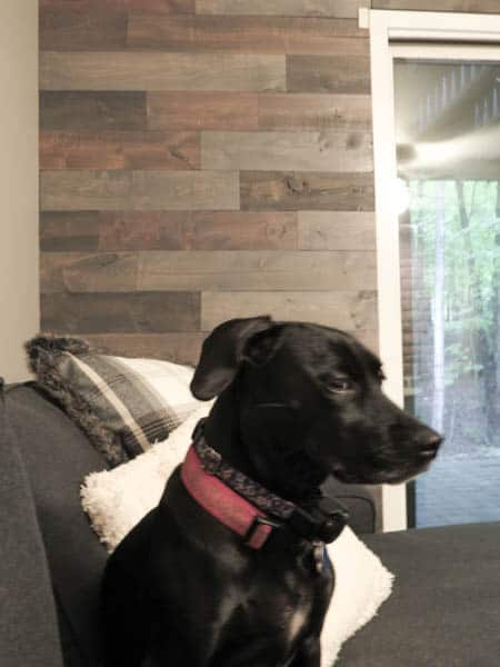 My dog giving me the side-eye while I was taking pictures of the rec aimed wood wall.