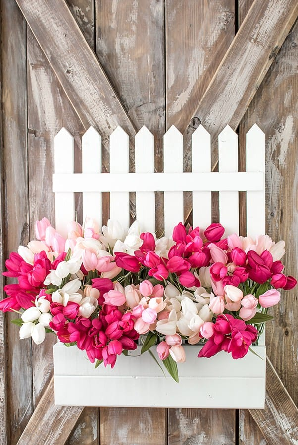 A picket fence window box with pink and white tulips.