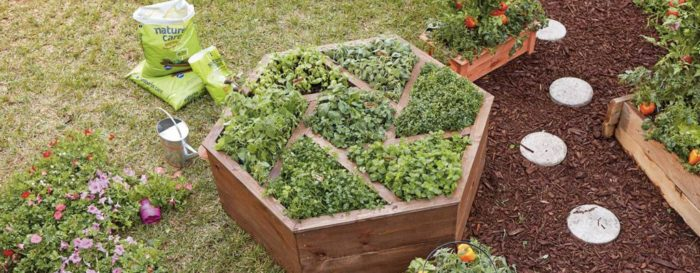 A raised garden bed made into geometric shapes for vegetable plants.