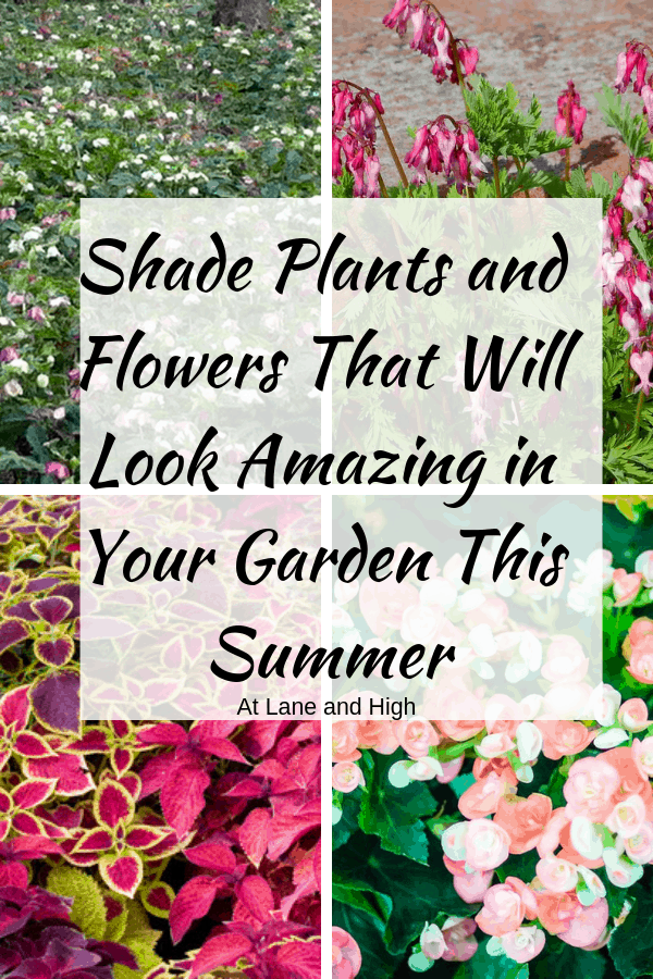 Shade Plants pin for Pinterest.