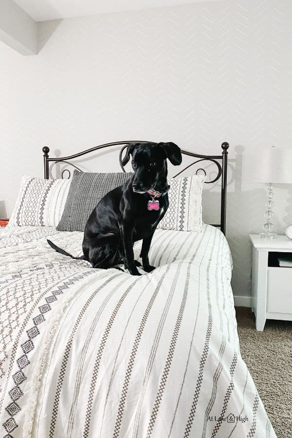 this shows the focal wall with my black dog sitting on the bed.