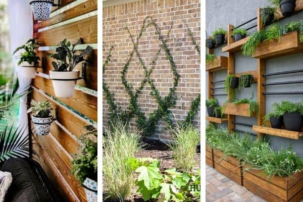 Here are 3 accent wall ideas using plants.