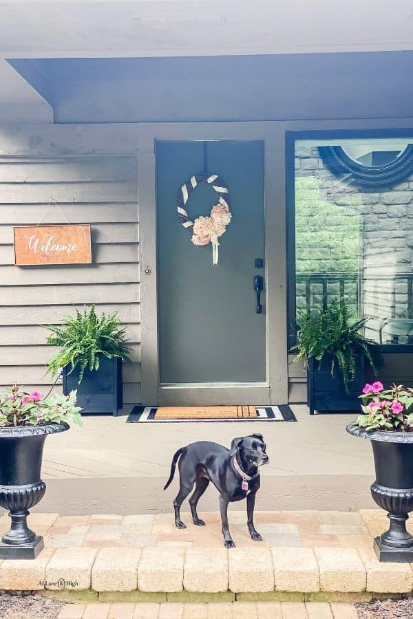 My dog on the front steps next to the urns with pink impatiens and the planters flanking the front door.