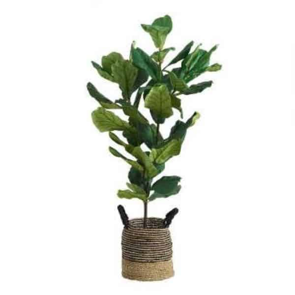 A faux fiddle leaf fig tree in a woven basket with a white background.
